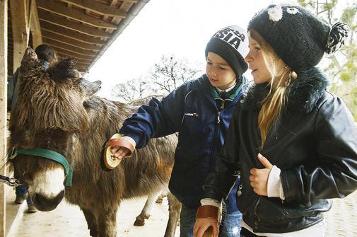 Streicheleinheiten für Tier und Seele – Flüchtlingskinder besuchen Gut Herbigshagen